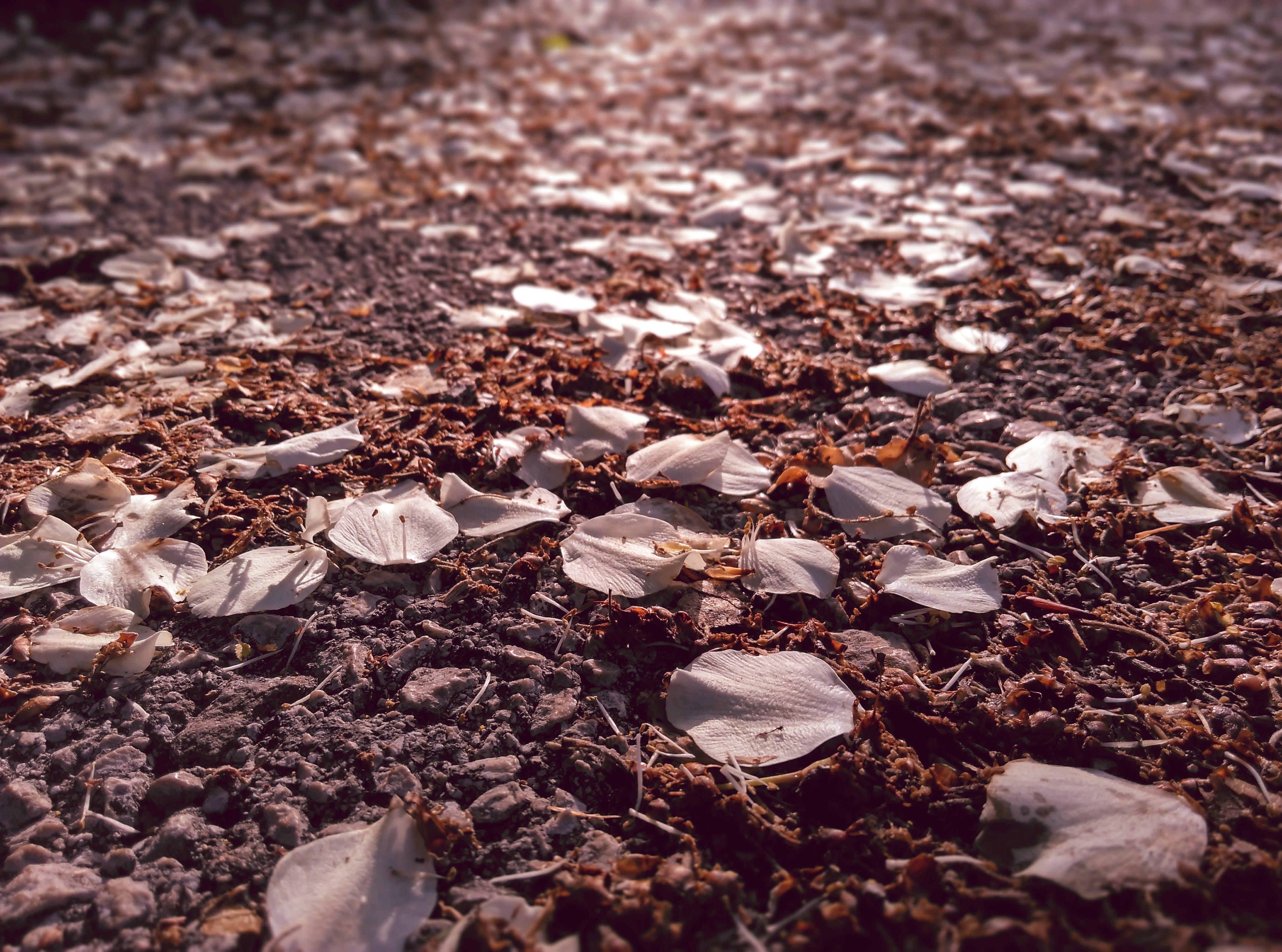 Gratis lagerfoto af dybde, nedfaldne blade