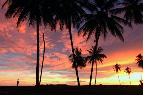 Imagine de stoc gratuită din apus de soare în meulaboh