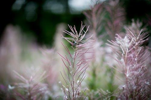 Gratis lagerfoto af have, makro, plante, vækst