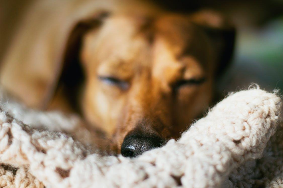 Ilmainen kuvapankkikuva tunnisteilla eläin, koira, kotieläin