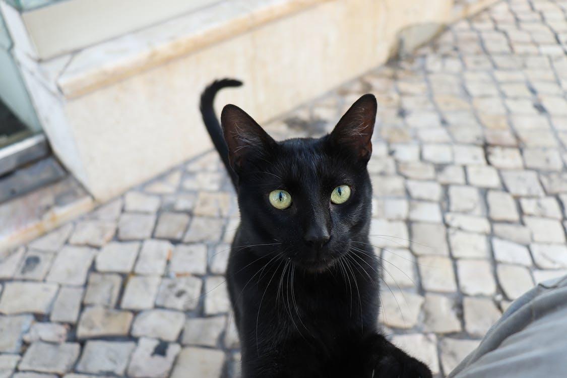 animal portrait, cat, city