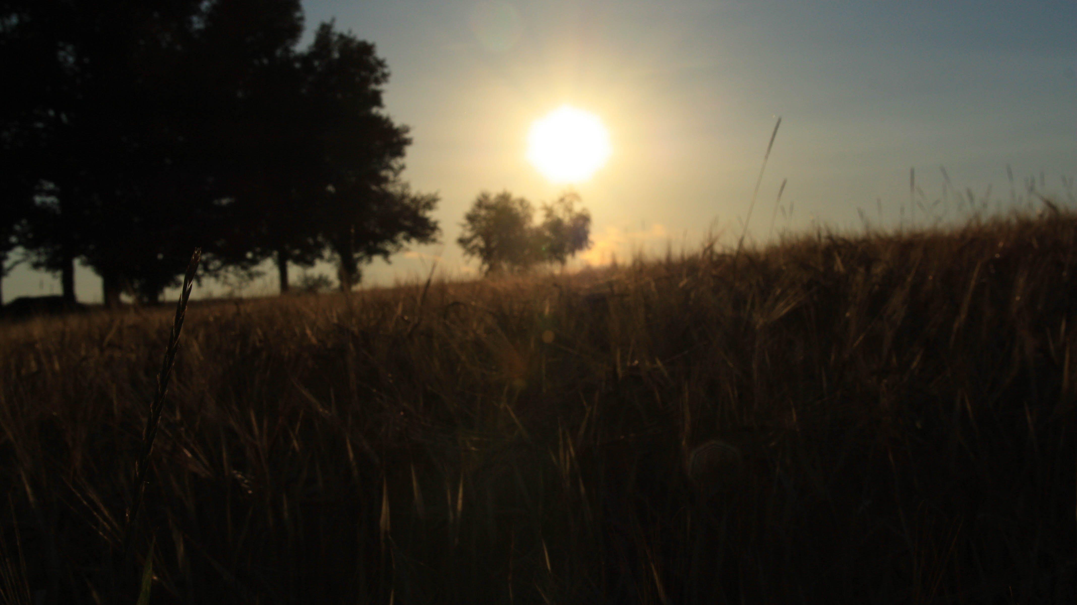 Kostenloses Stock Foto zu abendsonne, feld, felder, natur