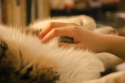 Gratis stockfoto met hand, kat