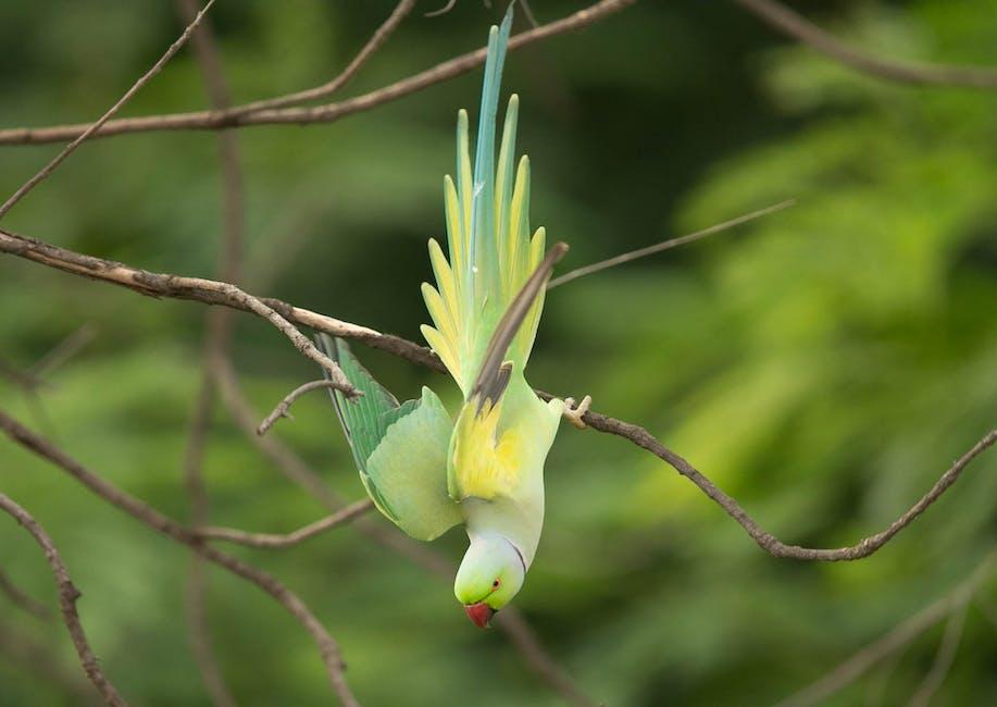 Bird summer animal blur
