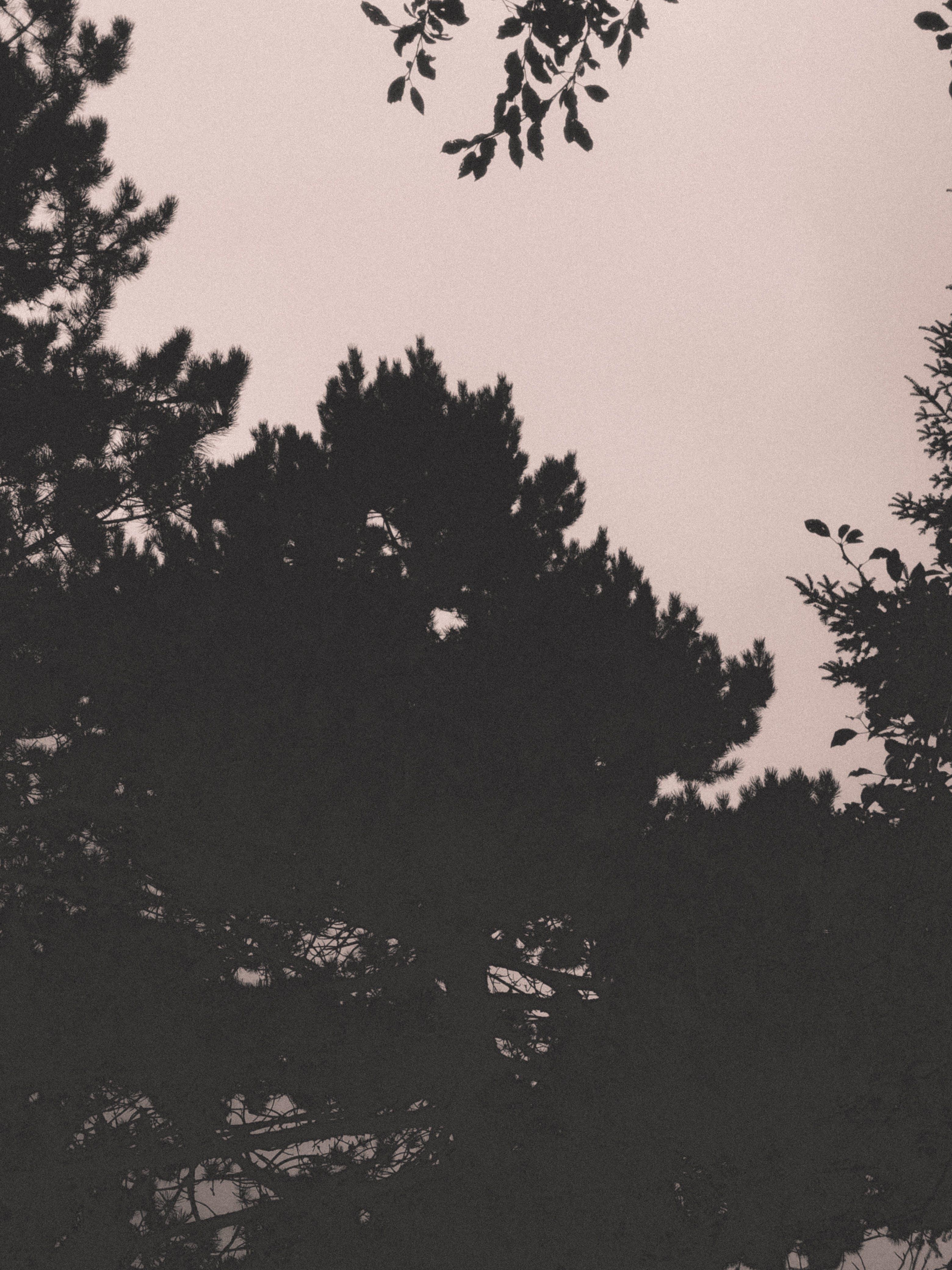 Free stock photo of sky, trees, silhouettes