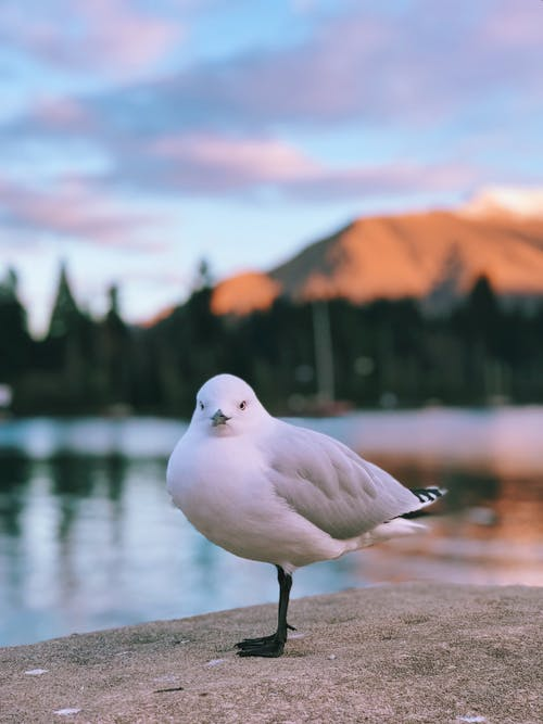 Selective Focus Photo Of White Seagull