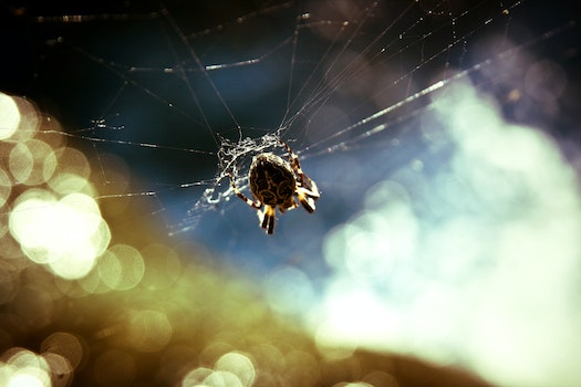 Free stock photo of animal, insect, cobweb, spider