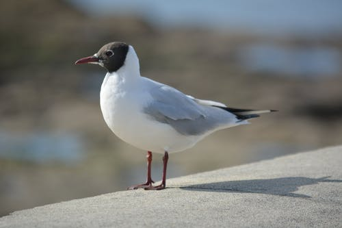 Foto profissional grátis de animais selvagens, animal, ave marinha, ave oceânica