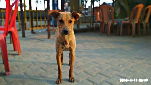 Free stock photo of cute animals, dog, india