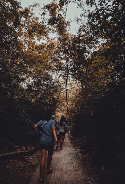 Δωρεάν στοκ φωτογραφιών με kanchanaburi, Άνθρωποι, δέντρα, εποχιακός καταρράκτης