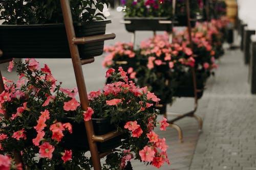 Kostnadsfri bild av anläggning, blomkrukor, blomma, blommor