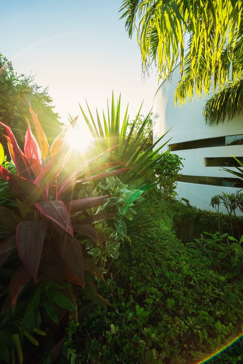 arboles, crecimiento, destello solar