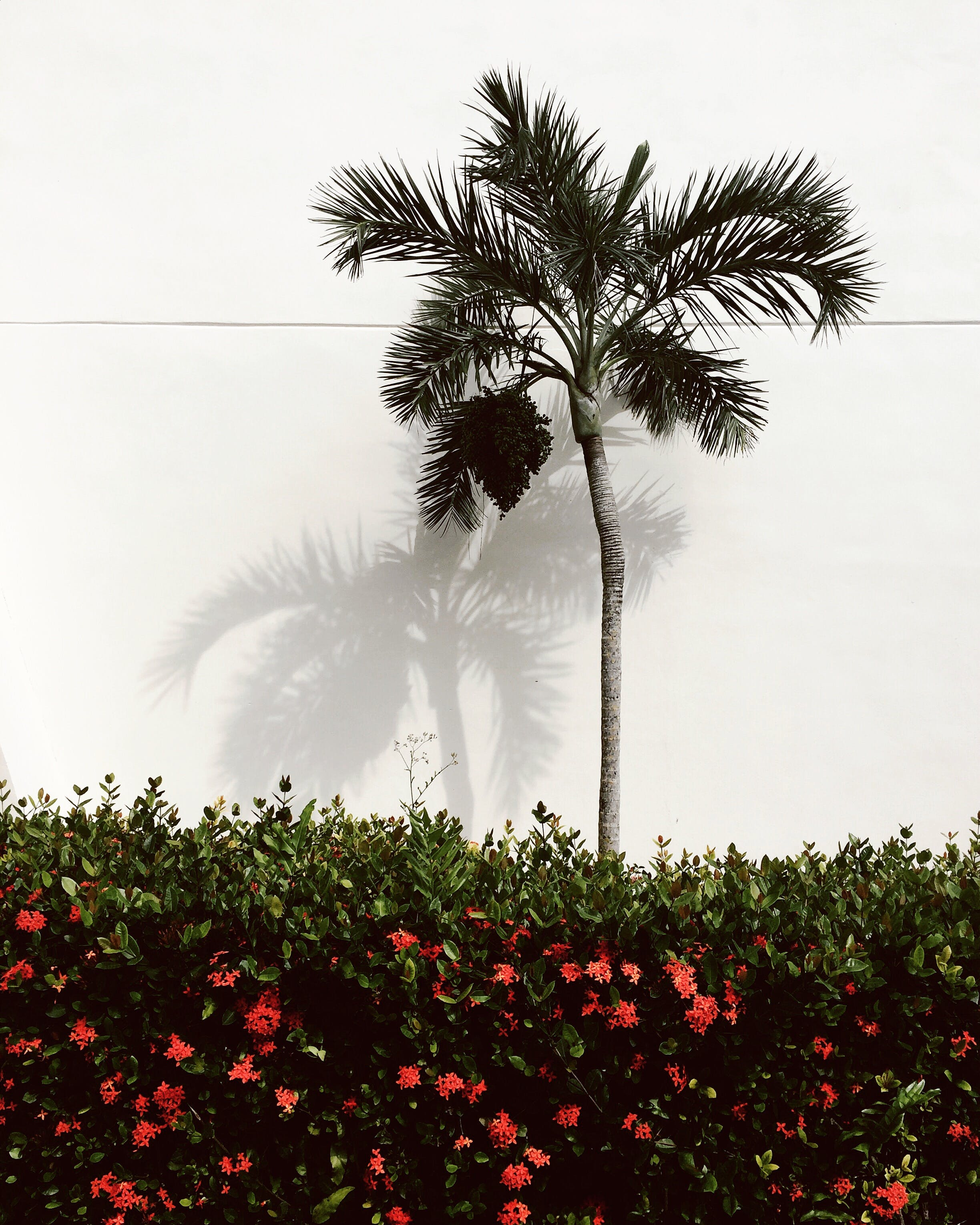 Gray Coconut Tree Beside White Wall