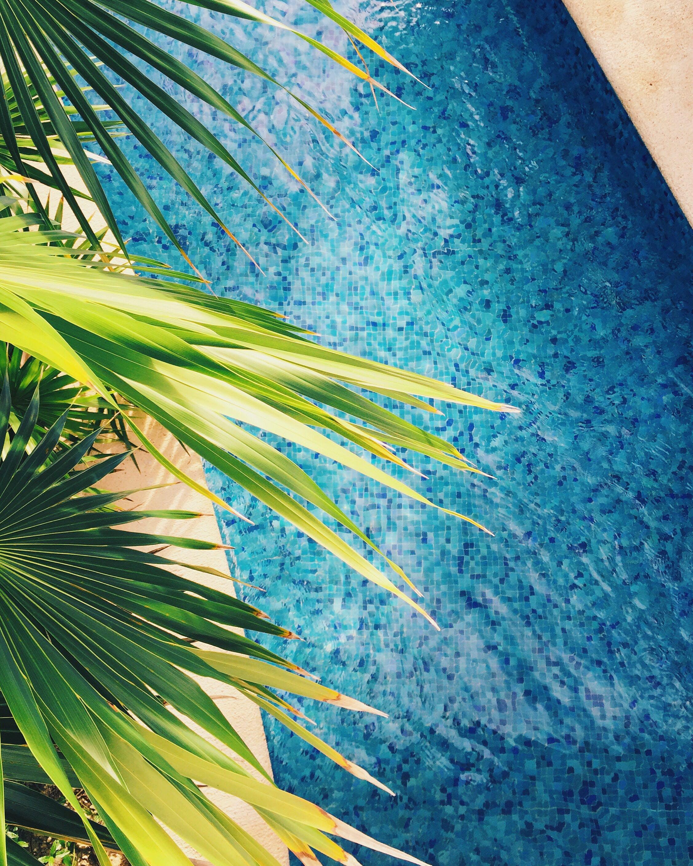 Kostenloses Stock Foto zu badeort, baum, draußen, entspannung