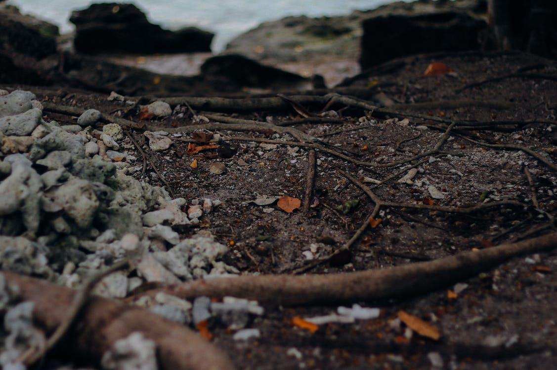 Imagine de stoc gratuită din forestier, mare, pădure