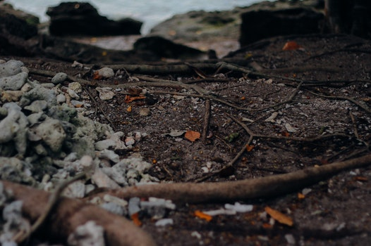Free stock photo of sea, tropic rainforest, land, soil
