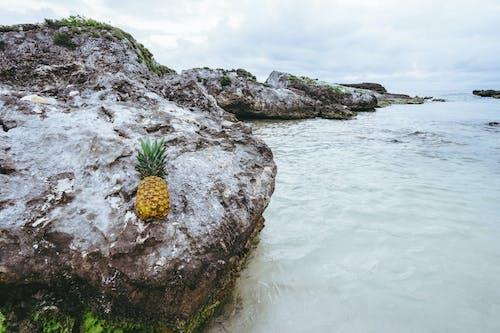 Free stock photo of fruit, mexico, ocean