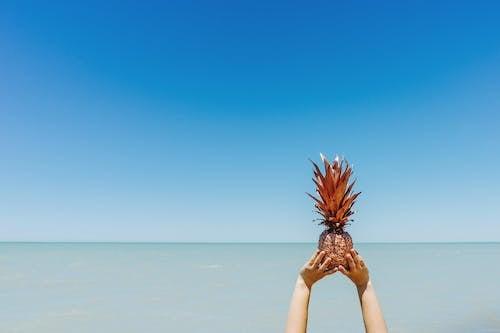 Darmowe zdjęcie z galerii z ananas, lato, morze, natura