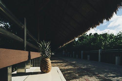 Photos gratuites de abri bus, abri de jardin, ananas, arbres