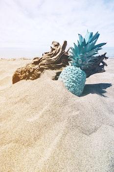 Free stock photo of wood, sand, water, ocean