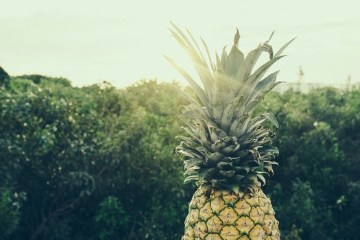 Free stock photo of food, trees, pineapple, color