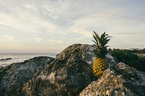 Pineapple on Rock