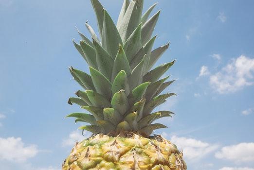 Kostenloses Stock Foto zu himmel, sommer, ananas, blauer himmel