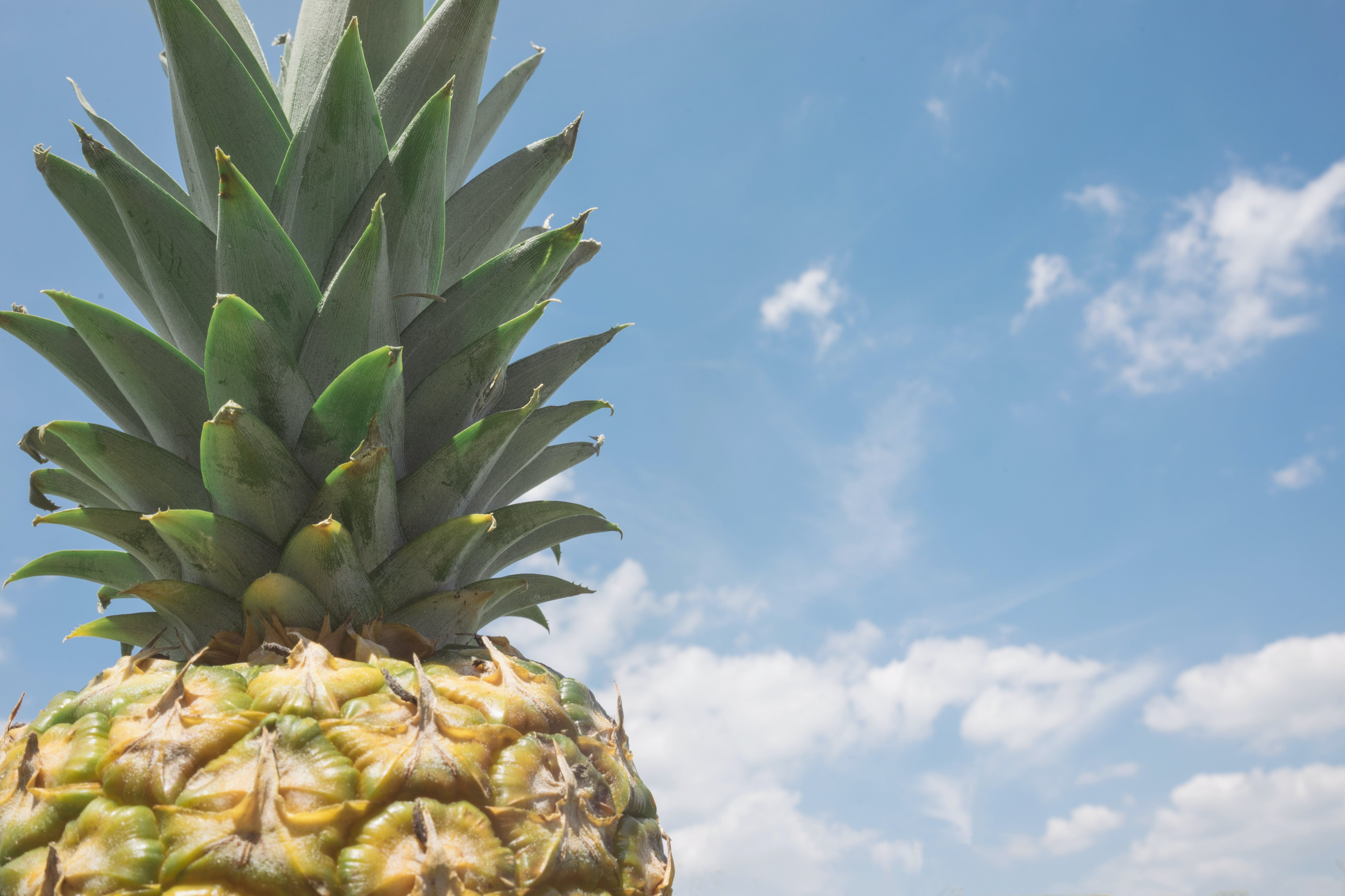 Focus Photo of Yellow and Green Pineapple Under Blue Sky