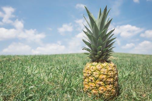 Základová fotografie zdarma na téma ananas, barvy, hřiště, krajina