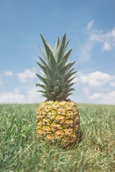 Free stock photo of summer, hill, grass, pineapple