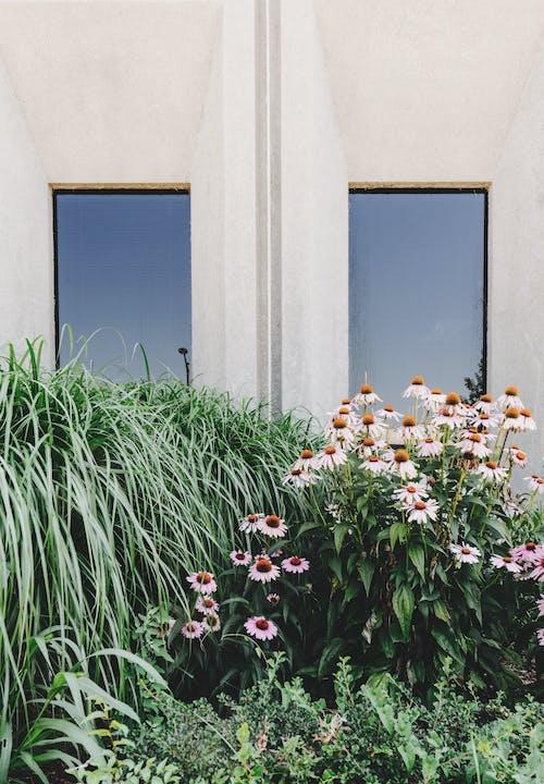 Foto d'estoc gratuïta de brillant, creixement, edifici, finestres