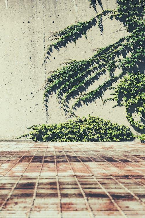 Foto d'estoc gratuïta de formigó, heura, metall, mur
