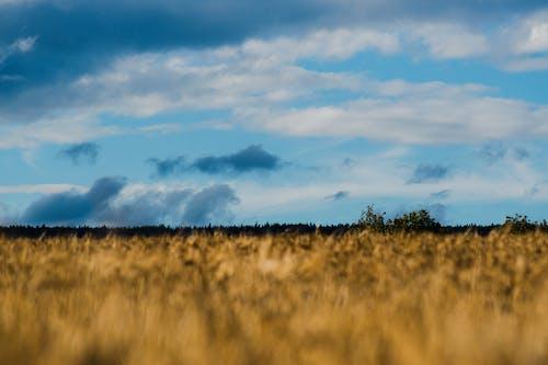 Photos gratuites de bleu ciel, champ d'orge, ciel, ciel nuageux