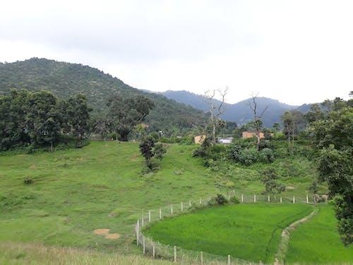 Foto profissional grátis de bhaktapur, ecológico, floresta, Nepal