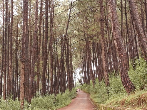 Foto profissional grátis de árvores, bhaktapur, floresta, Nepal