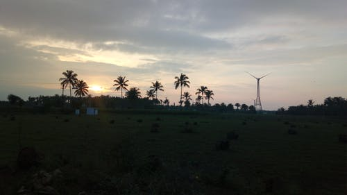 Hindistan cevizi ağacı içeren Ücretsiz stok fotoğraf