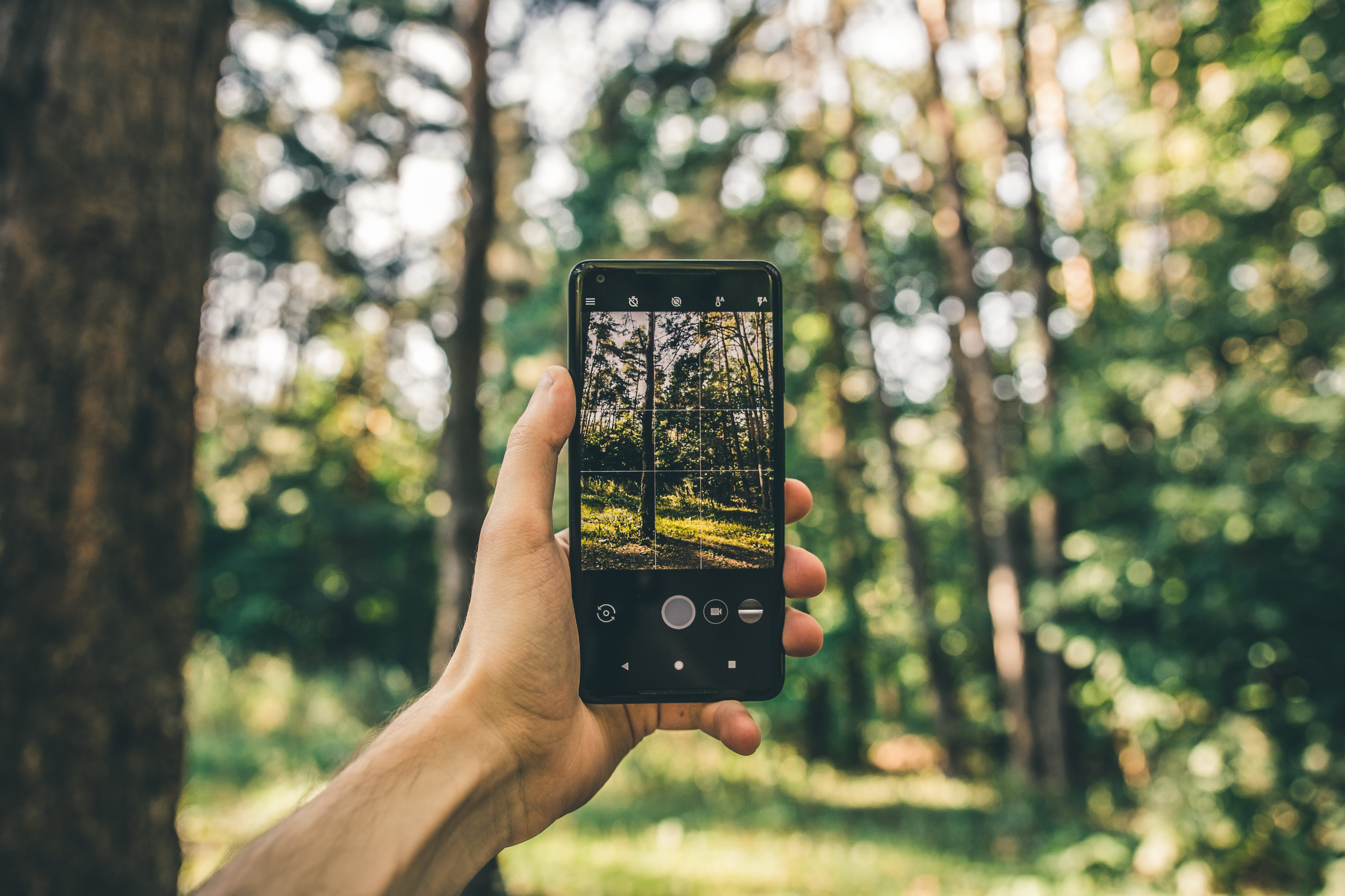 Person Taking Photo Of Trees