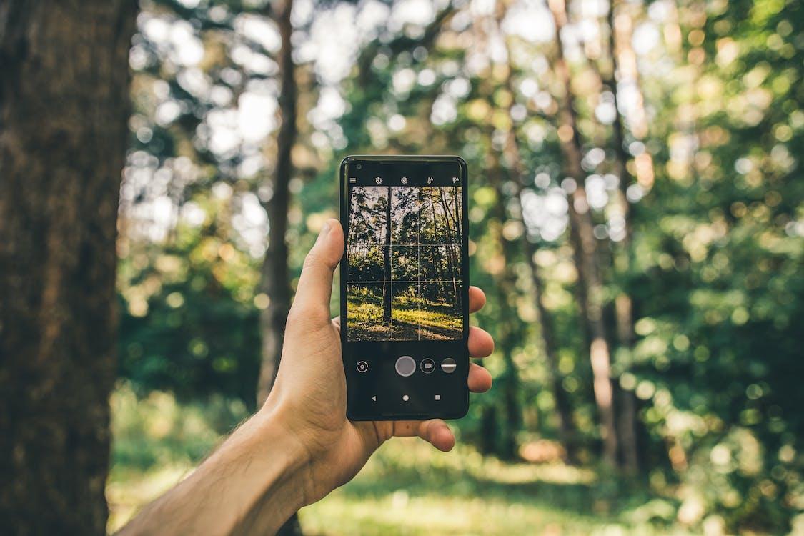 arbres, écran, forêt