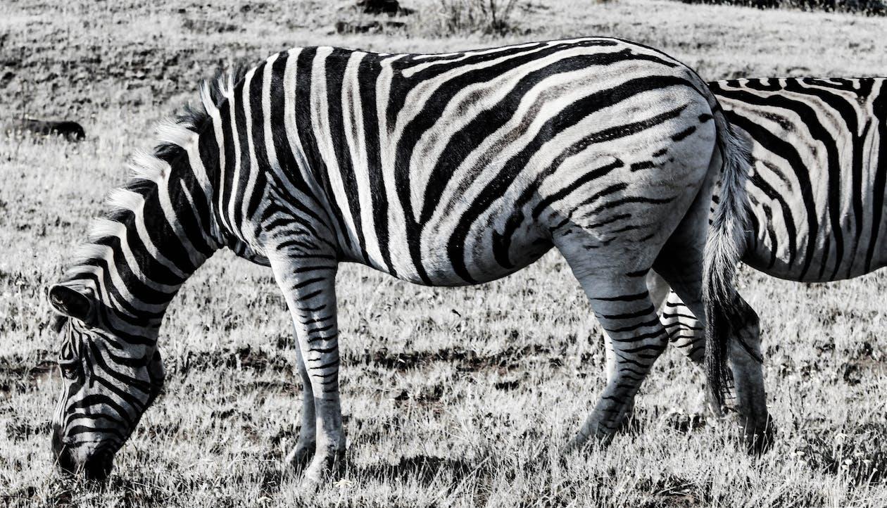 afrika, dyr, moder natur