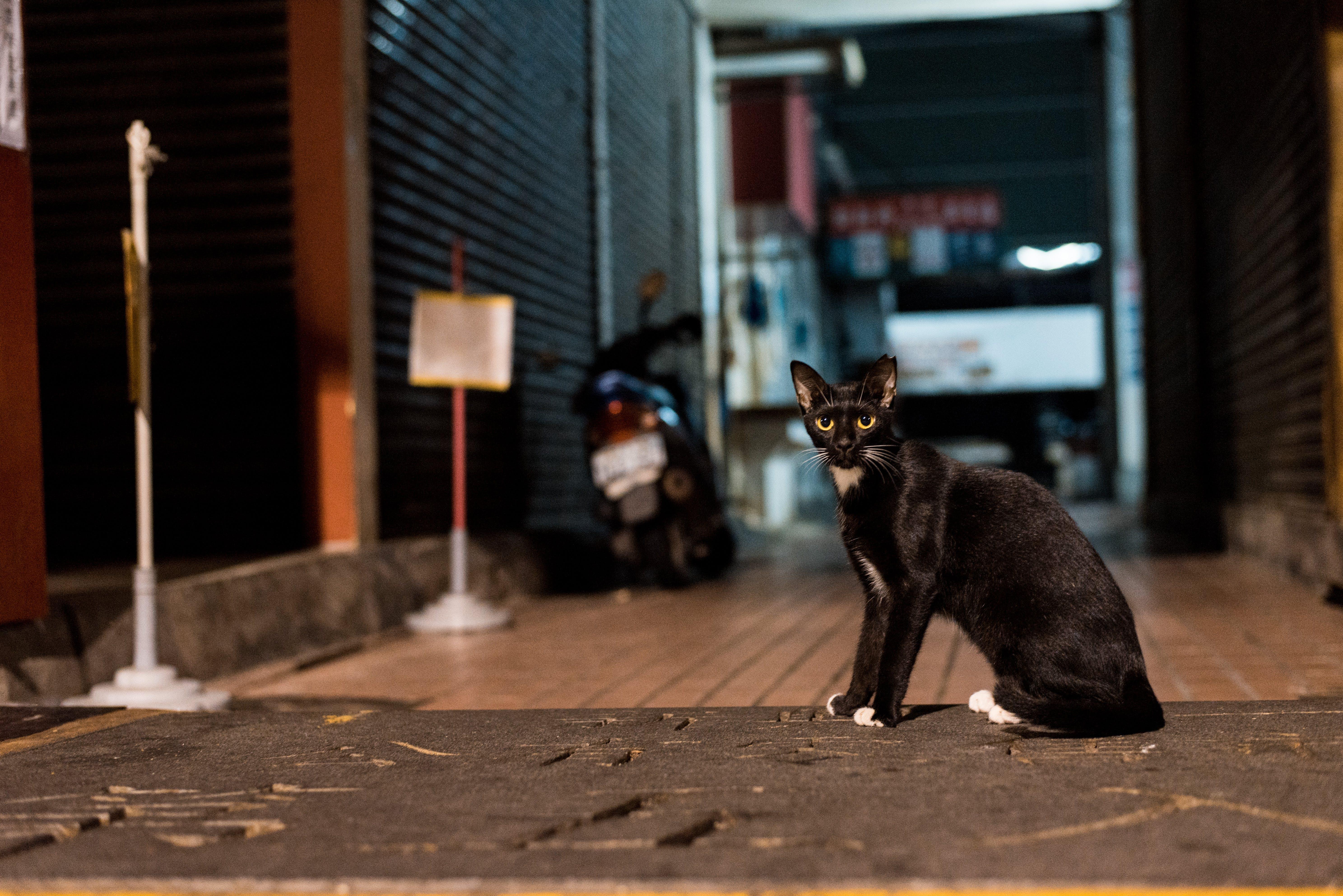 White and Black Tuxedo Cat Sitting on Sidewalk