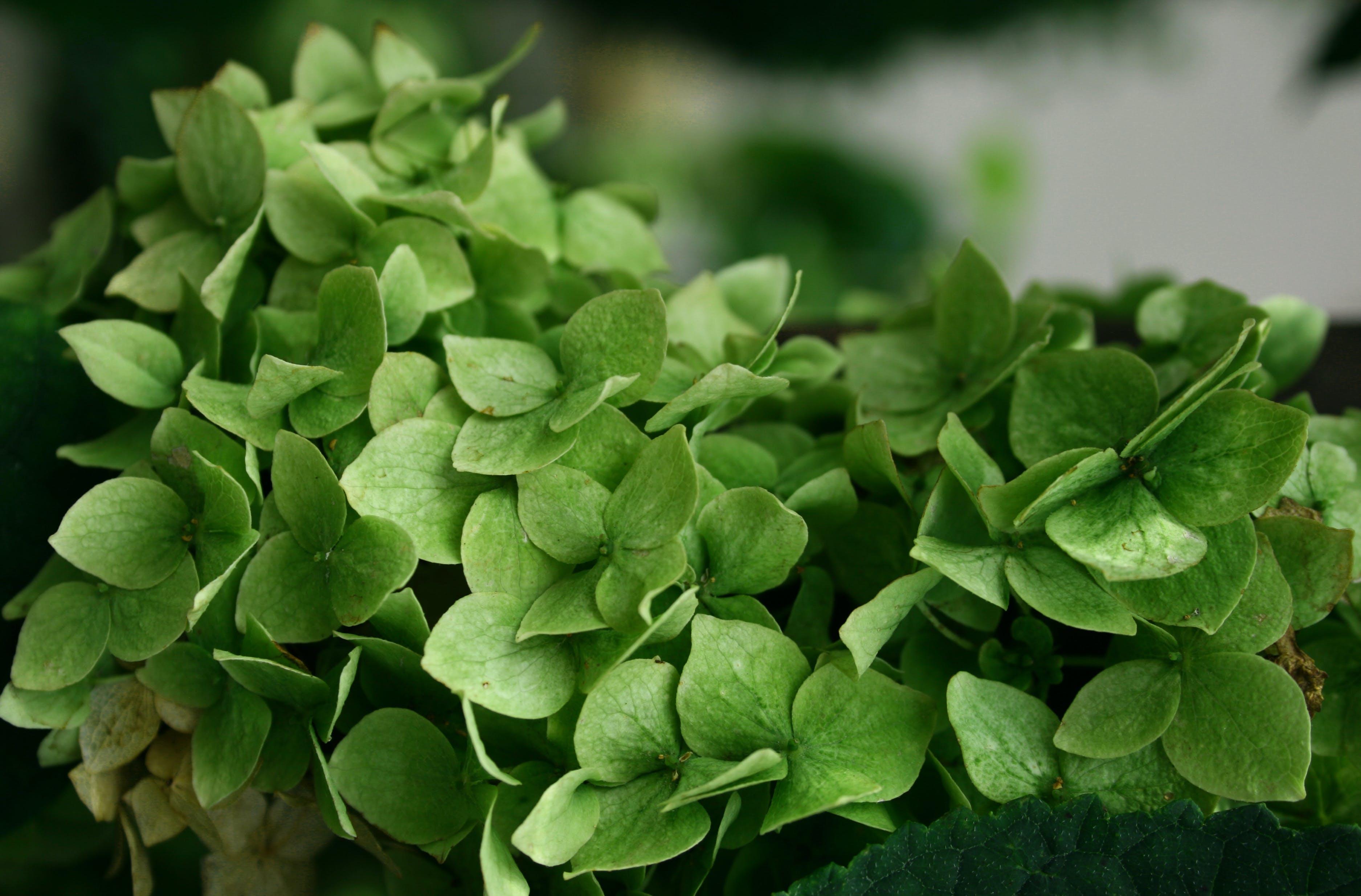 Foto d'estoc gratuïta de creixement, jardí, planta, verd