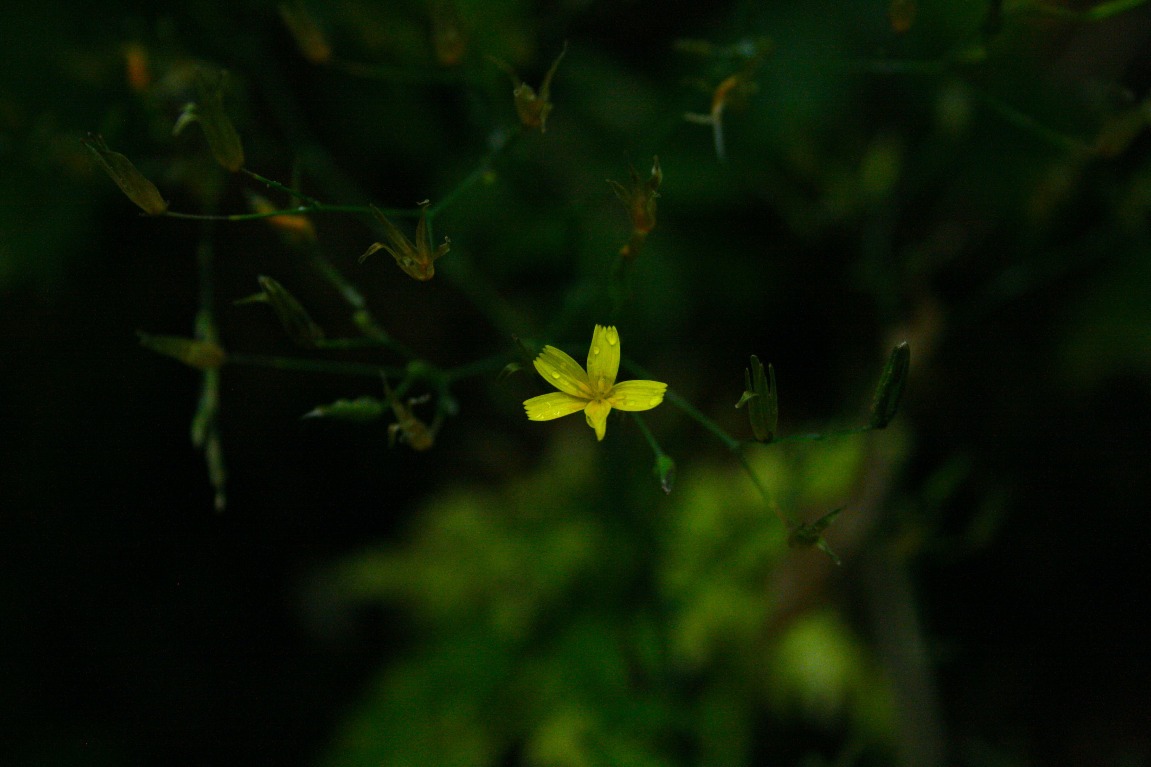Selective Focus Photograph Of Yellow Flower