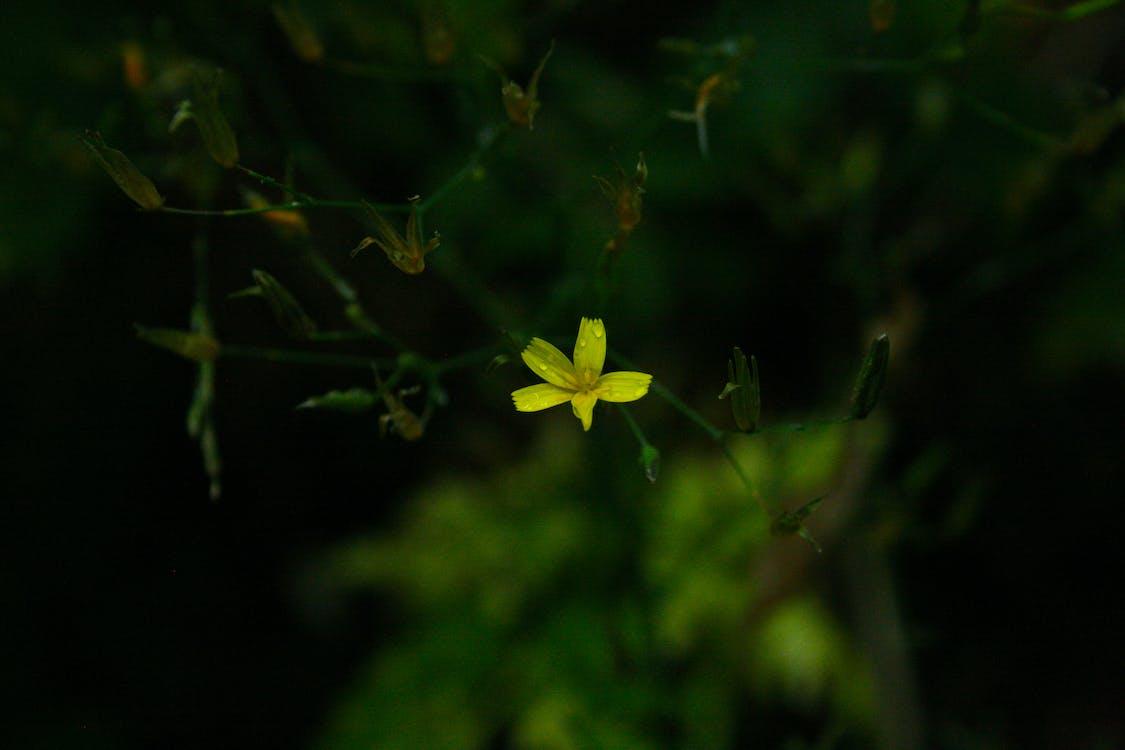 blomma, dagg, flora