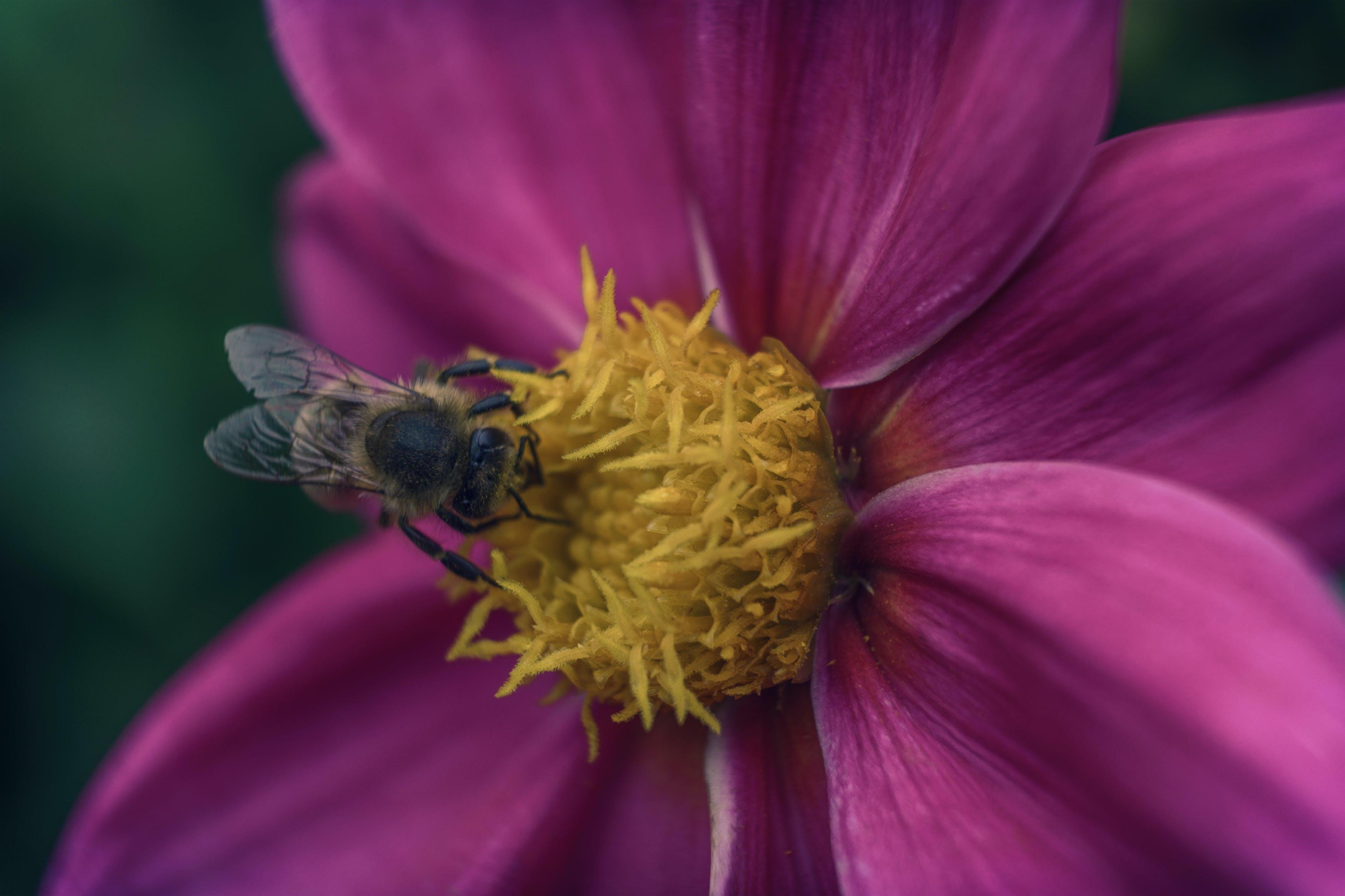 Ingyenes stockfotó makró, makrófotózás, méh, nektár témában
