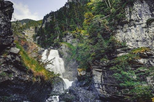 森林, 瀑布 的 免费素材图片