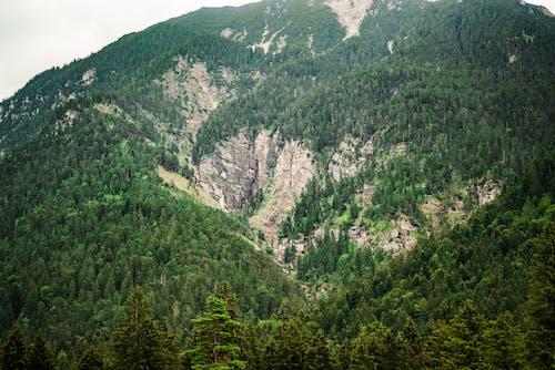 巴伐利亞, 森林, 瀑布 的 免费素材图片