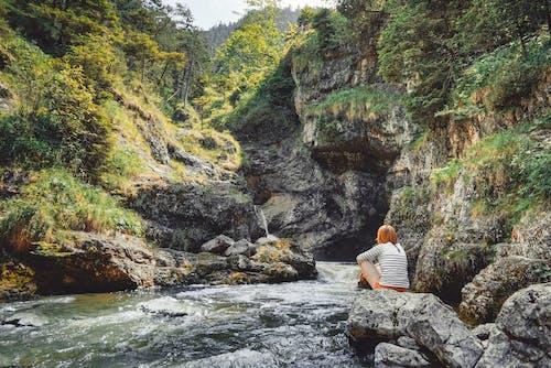 คลังภาพถ่ายฟรี ของ กลางวัน, การเปิดรับแสงนาน, ต้นไม้, ธรรมชาติ