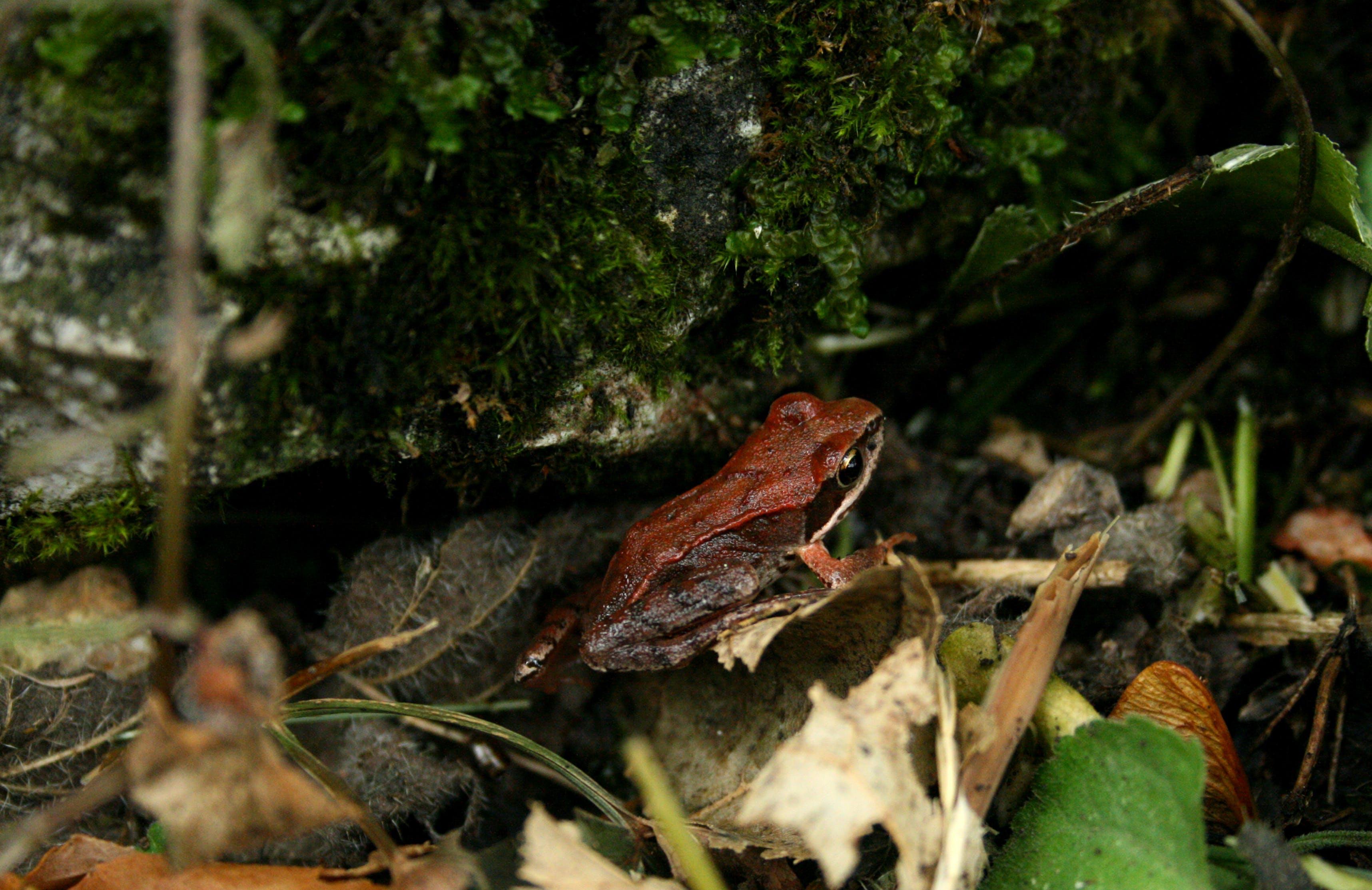 Základová fotografie zdarma na téma les, žába