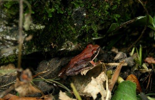 Photos gratuites de forêt, grenouille