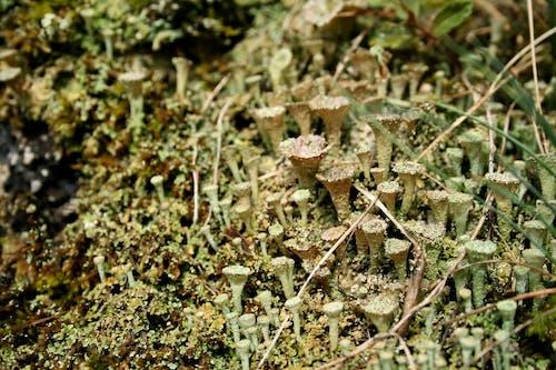 Photos gratuites de champignons, forêt, mousse